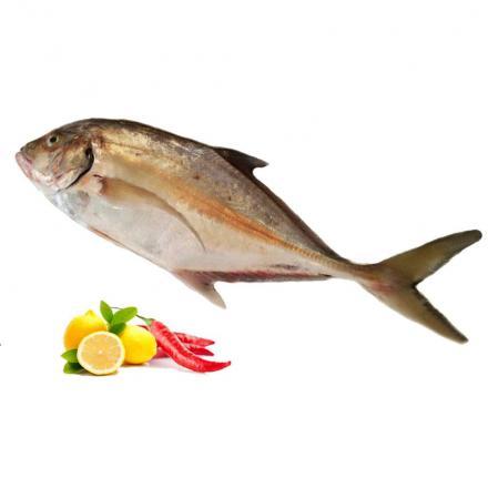 سمك الكنعد نوع من الاسماك للبيع Hamoor Fish